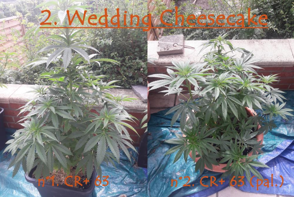 2 Wedding.png