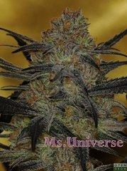 Ms universe.jpg