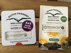 Kerosene Krash & Critical Orange Punch - Dutch Passion