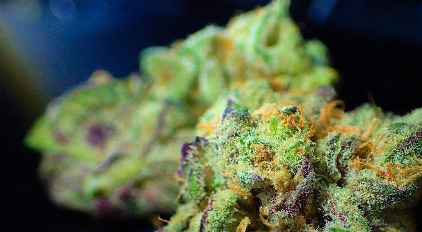 Des obstacles empêchent l'industrie du cannabis d'être inclusive et diversifiée