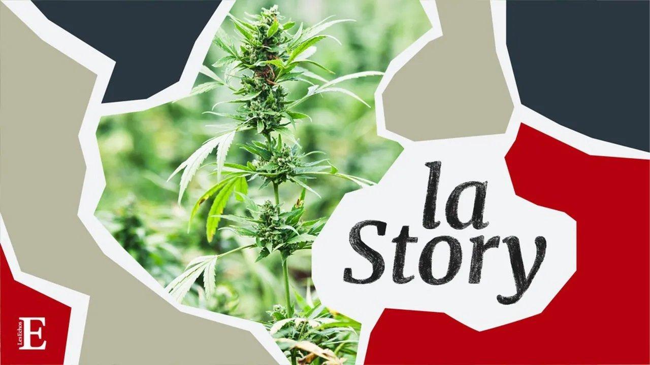 Cannabis, la ruée vers l'herbe