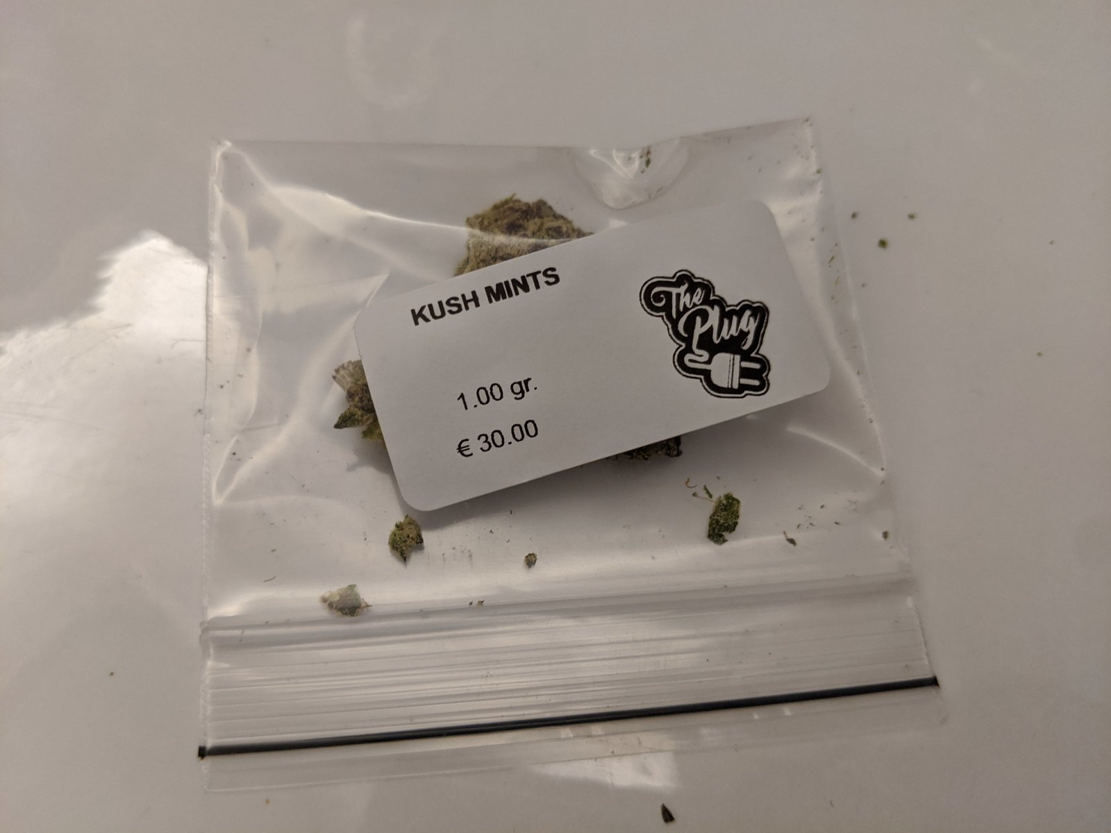 Kush Mintz - The Plug - Amsterdam 08.2020