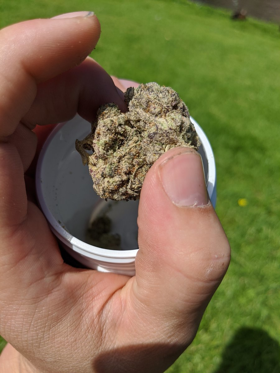 Wifi OG - Voyagers - Amsterdam 08.2020