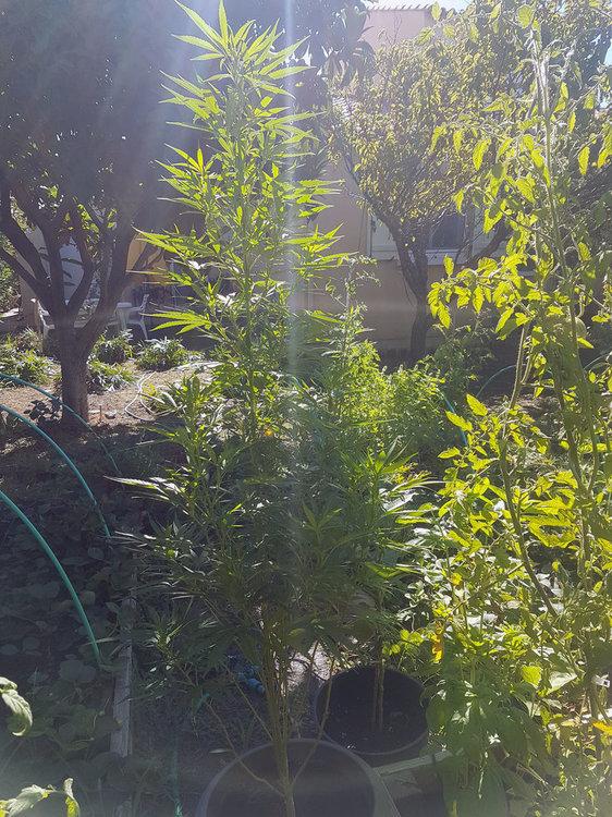 plant1-2020-08-30.jpg