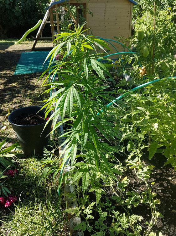 plant2-2020-08-30.jpg