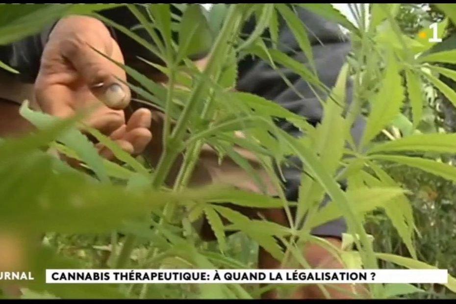 Polynésie - La culture du cannabis thérapeutique au programme du plan de relance