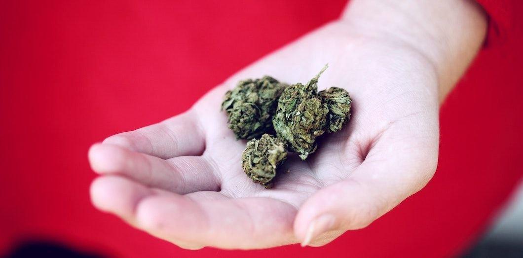 L'allergie au cannabis, un mal pour un joint
