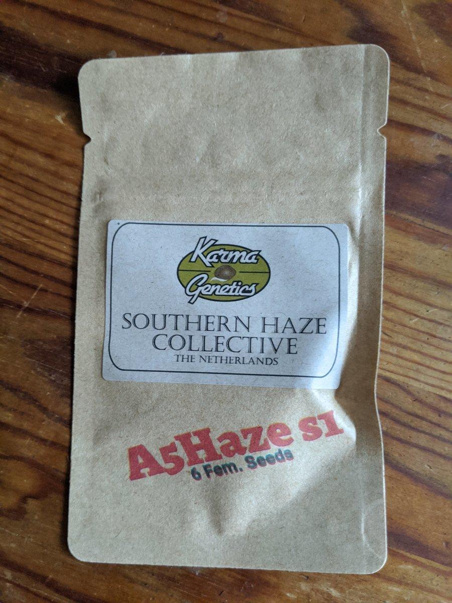 A5Haze S1 - Southern Haze Collective - Karma Genetics