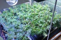 20200903_200336_crop_21.jpg