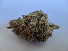 Gorilla CBD - Dinafem