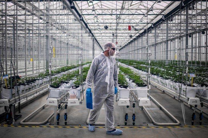 Cannabis médical: expérimenter «vite» et autoriser une production française