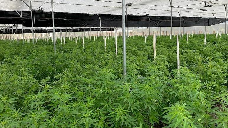 La culture du cannabis, un danger pour l'environnement?