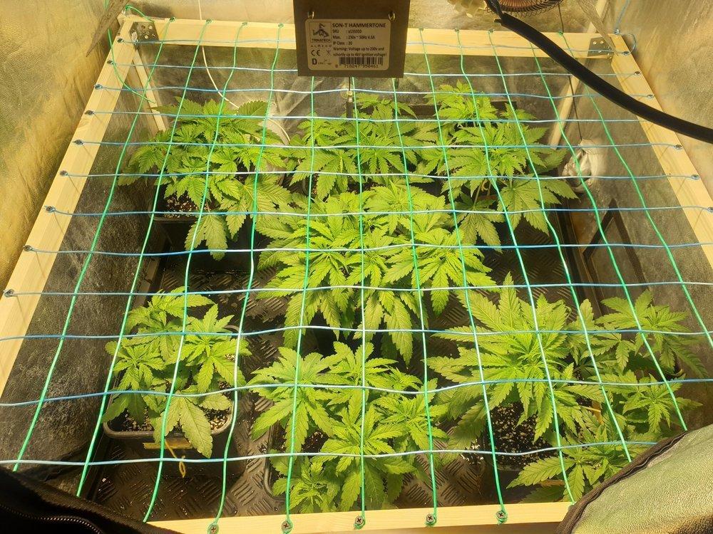 plante3.thumb.jpg.843579cd762f67cf3c5cdb626b531631.jpg