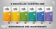 6 variétés CBD-Rich