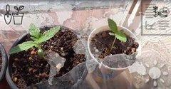Quand planter outdoor ?