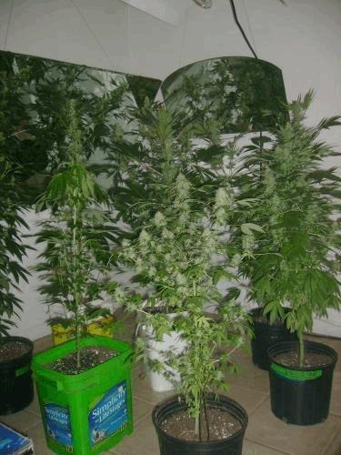 Floroom.jpg.9e784bb38426e31d1b67eac1fd939147.jpg