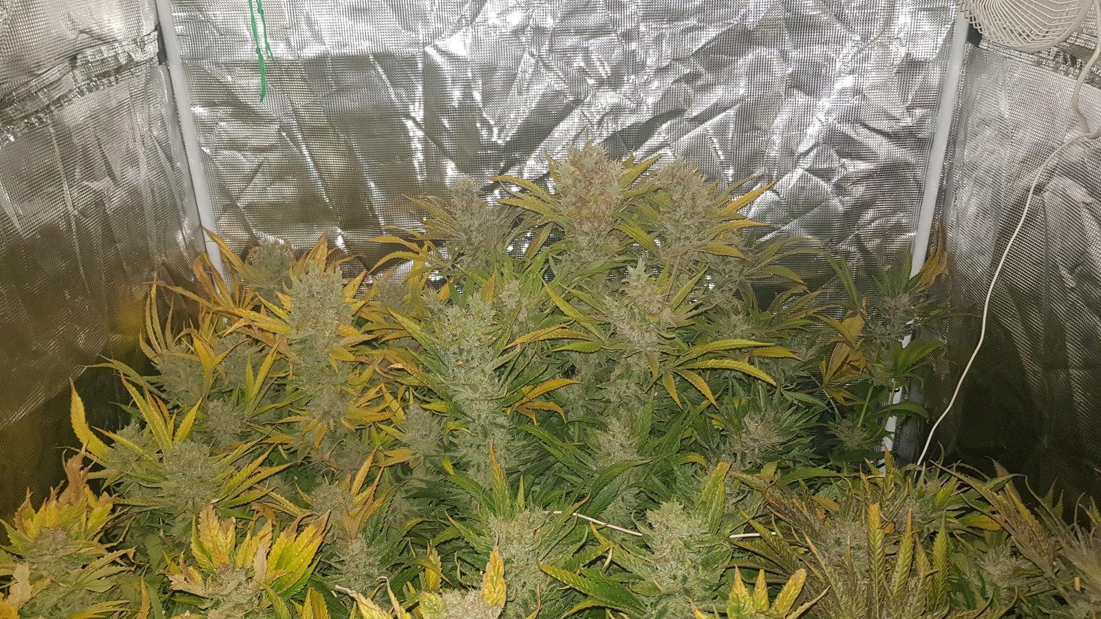 2eme grow