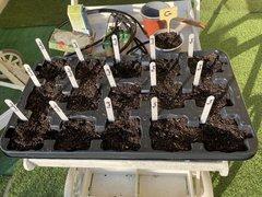 Trait de 15 trous - mis en terre des graines