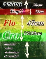 hauteur de grow sous 4x 60W miniQC + 50W spot unique olson