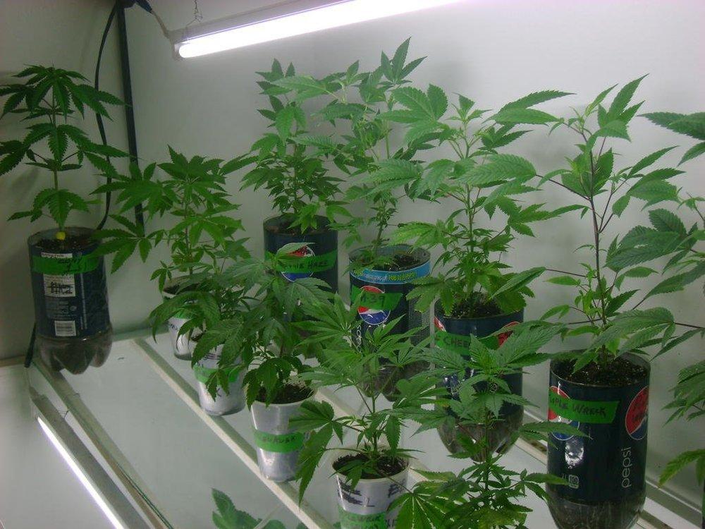 veg.thumb.jpg.a9f8647c353dbc45a9333cf175911f88.jpg