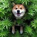 puff-doggy