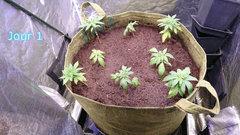 Mise en terre des plantes (variétés en description)