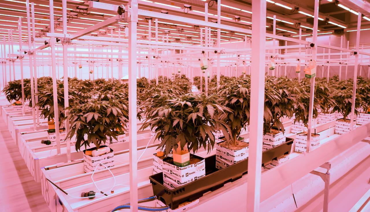 Colorado – Quand la culture du cannabis pollue plus que l'industrie du charbon !
