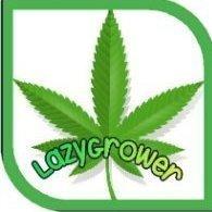 LazyGrower