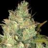 Fina-Weed