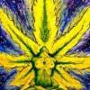 Babylone Weed Gardene