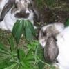 Cannabis et impuissance? - dernier message par High Rabbit