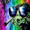 Plantes contre les insectes nuisibles du cannabis / plantes qui acceuillent les prédateurs des nuisibles du cannabis - dernier message par Maik