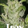 Un petit coin de jardin en... - dernier message par Tony6969
